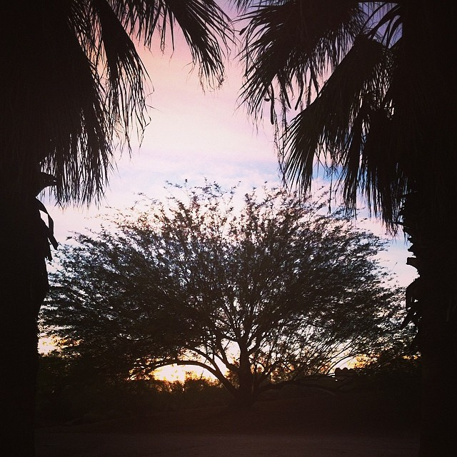 papago-park-palms-2