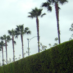 Where to eat in the Anaheim Resort District?