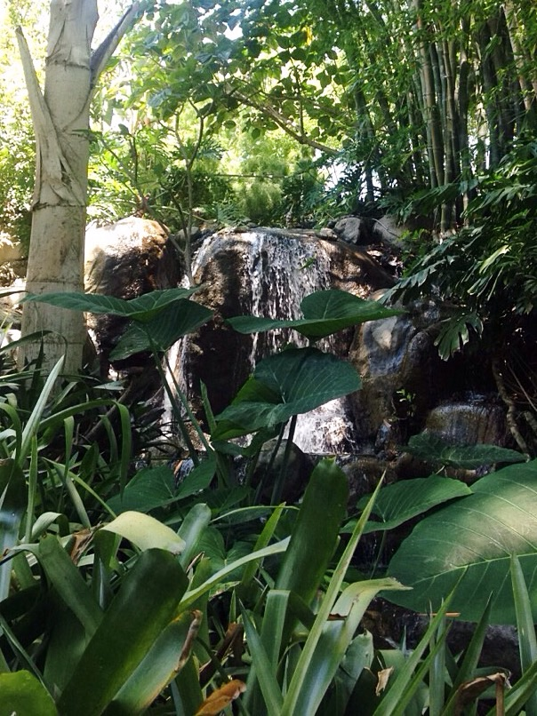 Jungle Garden, The Huntington, Pasadena - waterfall