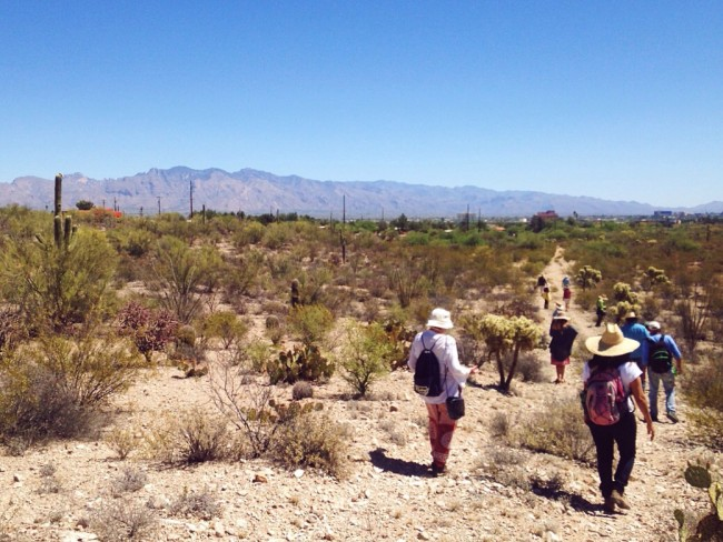 Desert hike in tucson