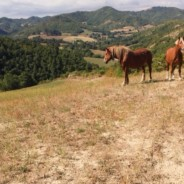 A Hike in Le Marche