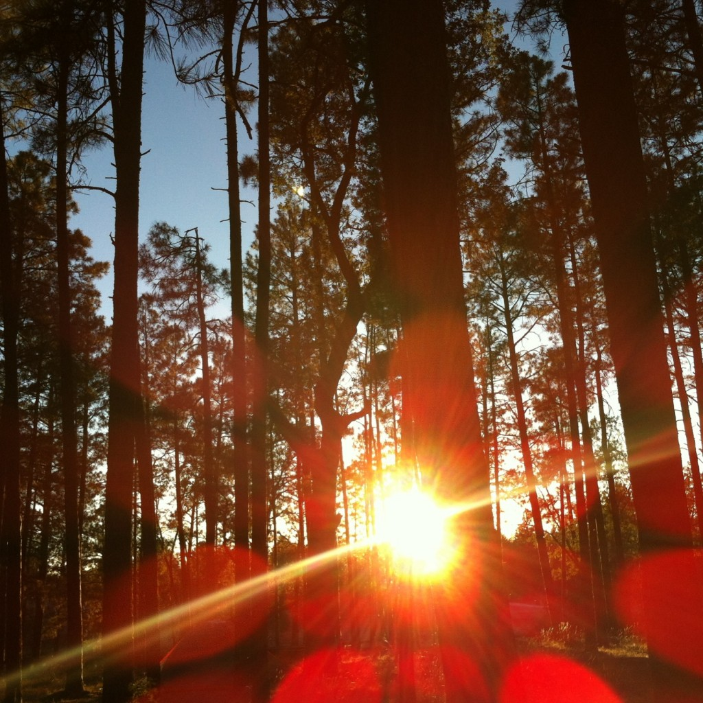 Sunlight through pines at campground