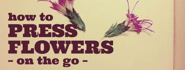 pressed-flowers-6 rec
