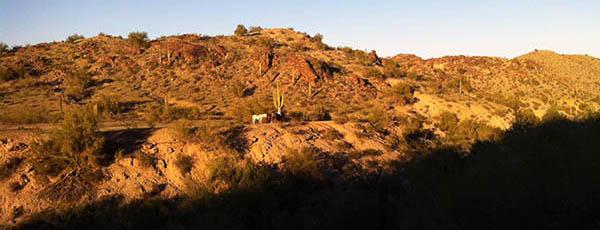 south-mountain-horses