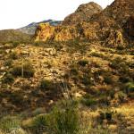 A Mount Lemmon Trip