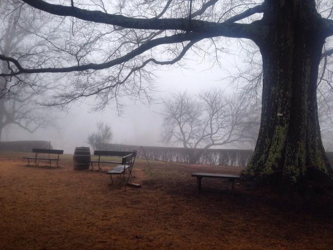 Monticello fog
