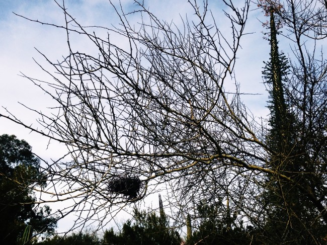 Arboretum nest