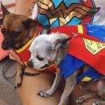 Snapshots of Phoenix Comicon 2016 #PHXCC