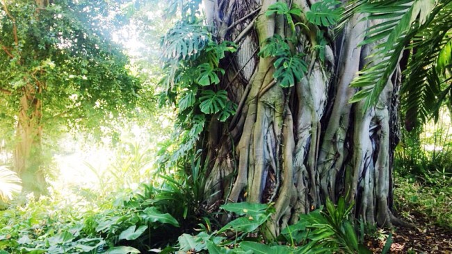 Huntington Library , Pasadena - jungle garden
