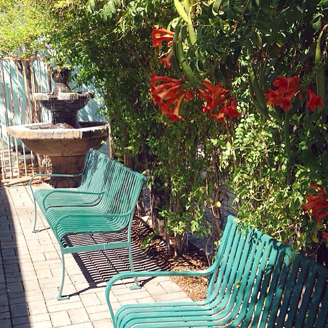 Mesa community garden