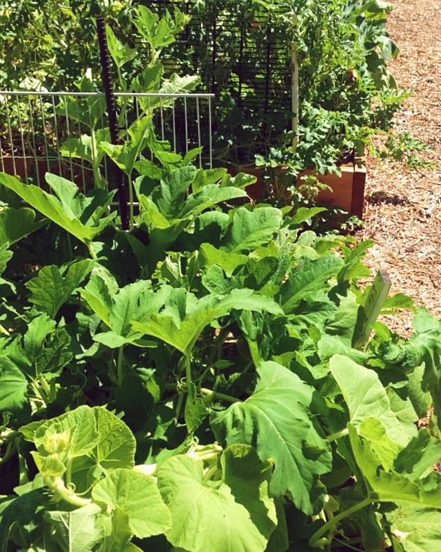 Mesa garden