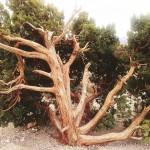 November Photo: Tree