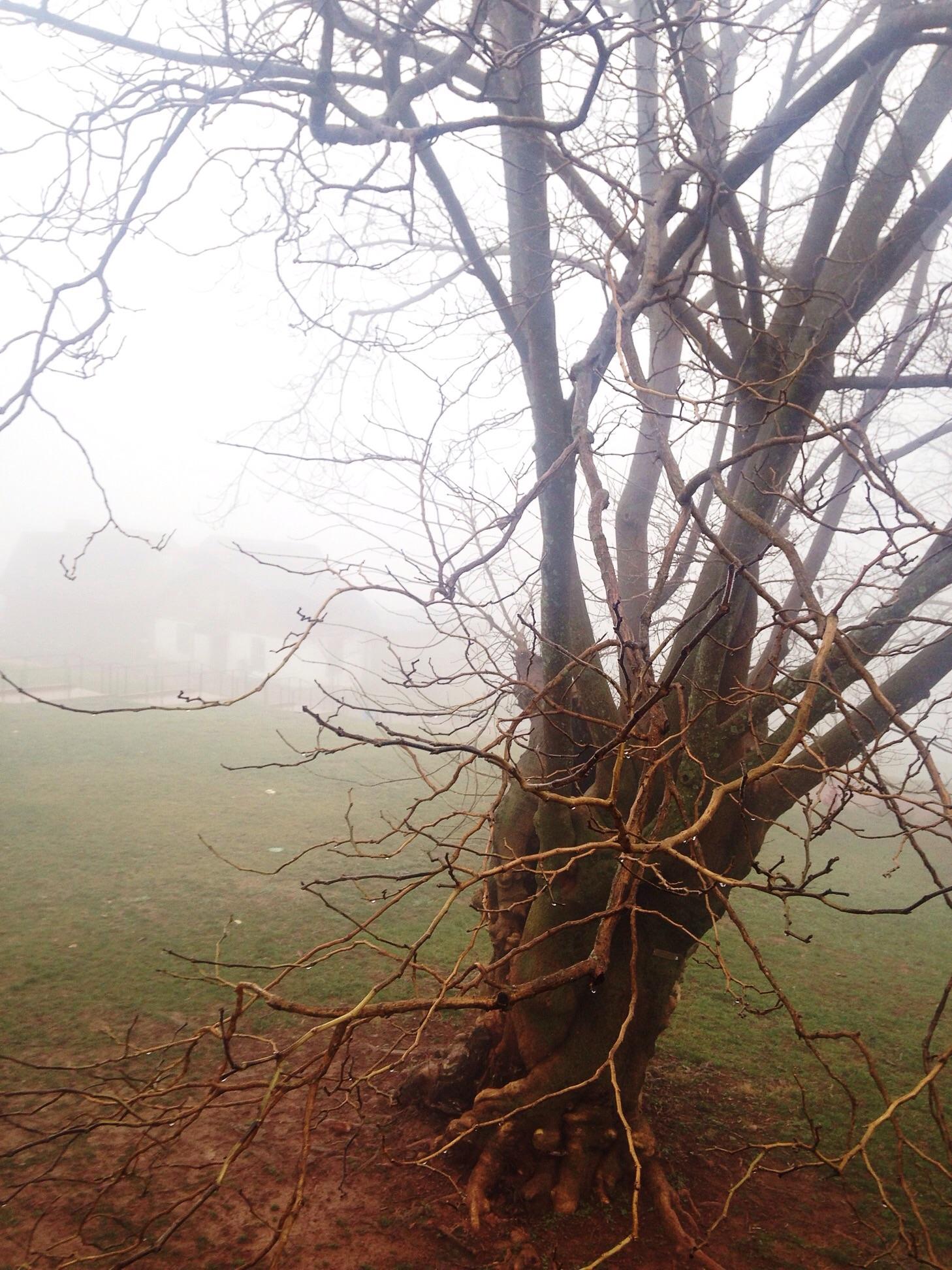 Monticello tree