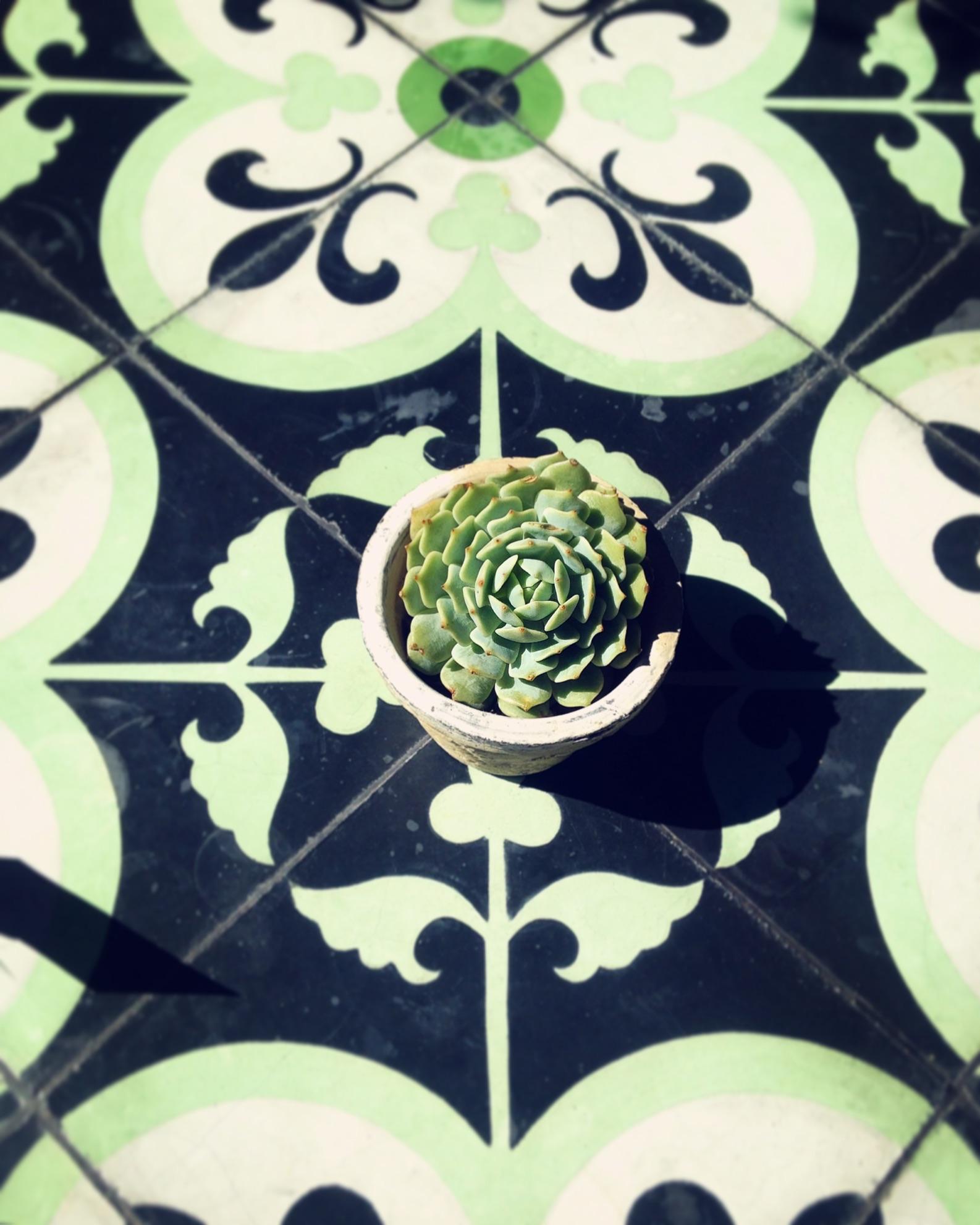 Succulent at cafe in tucson