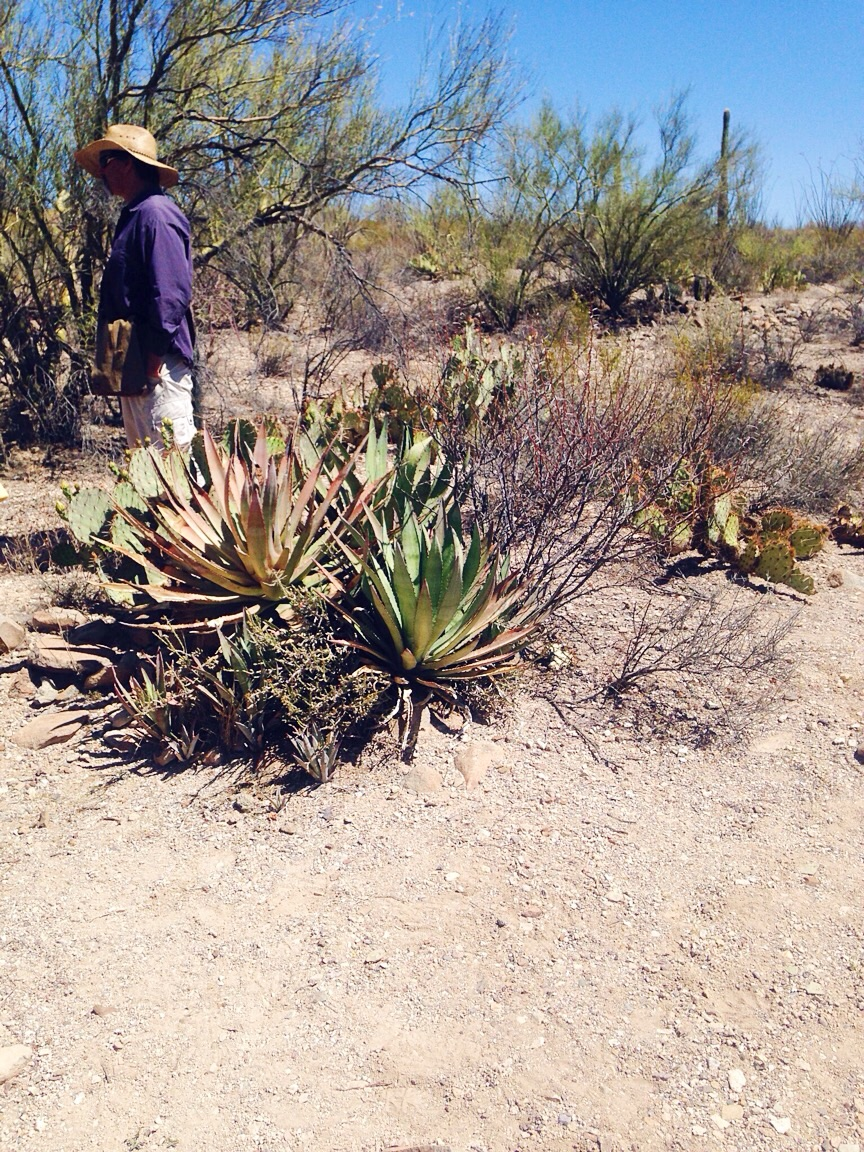 Agave oasis