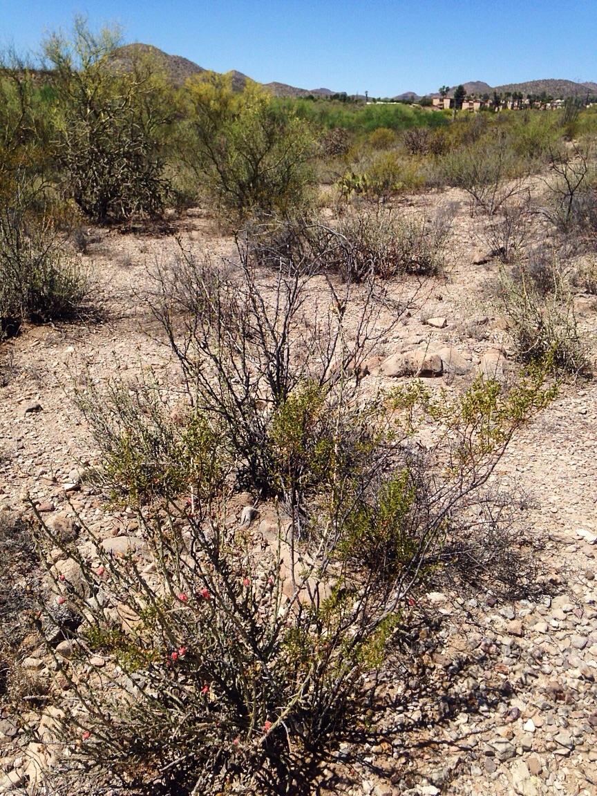 Desert terraces
