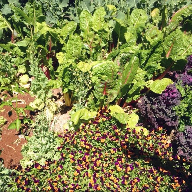 Maynards Garden