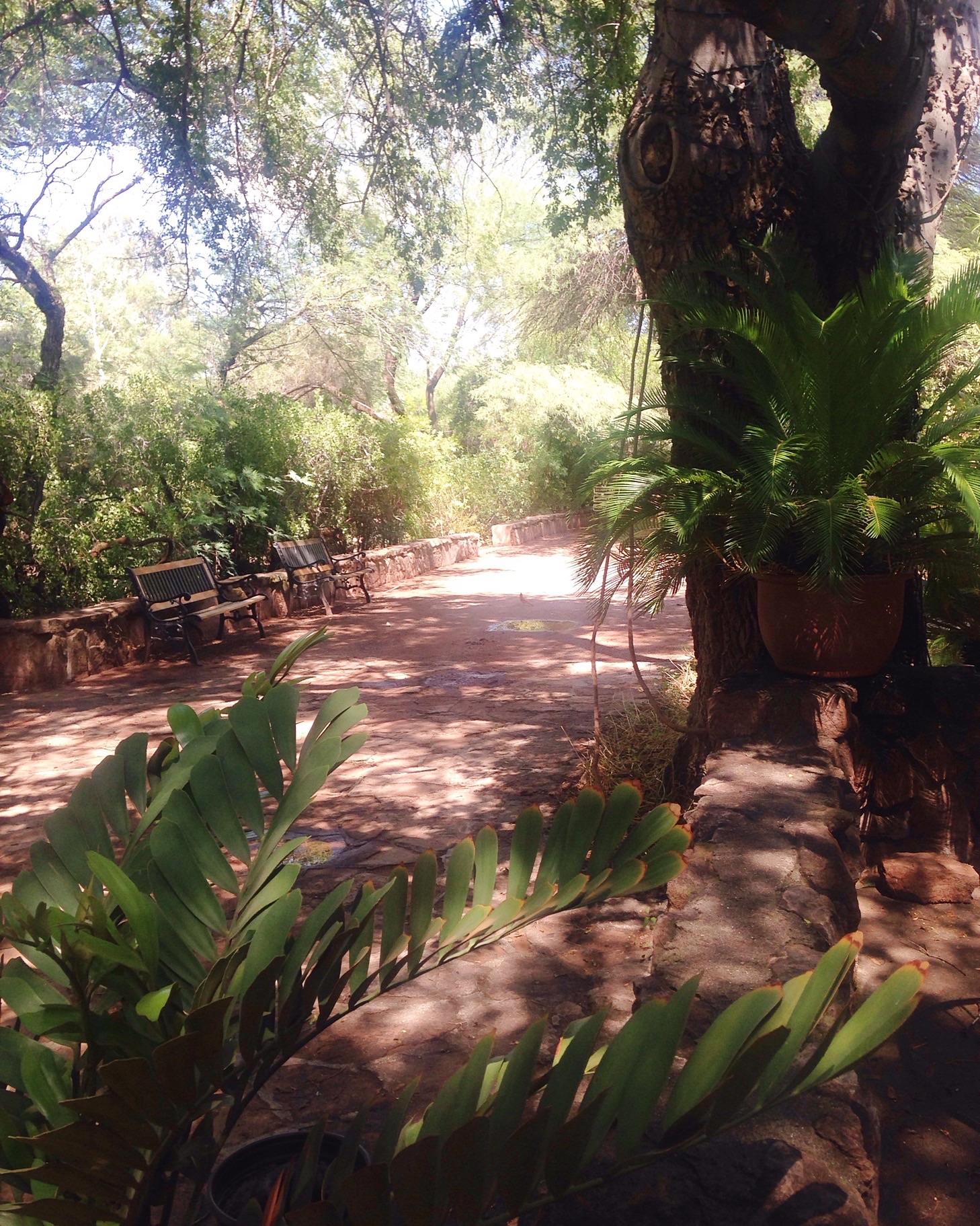 Boyce thompson arboretum - cardinal
